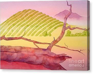 Sonoma Canvas Print by Robert Hooper