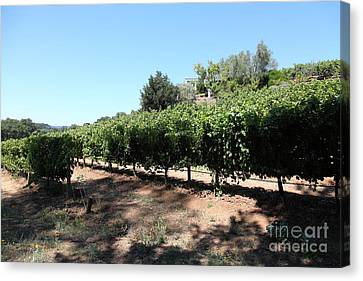 Napa Valley And Vineyards Canvas Print - Sonoma Vineyards In The Sonoma California Wine Country 5d24499 by Wingsdomain Art and Photography