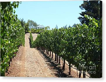 Napa Valley And Vineyards Canvas Print - Sonoma Vineyards In The Sonoma California Wine Country 5d24507 by Wingsdomain Art and Photography