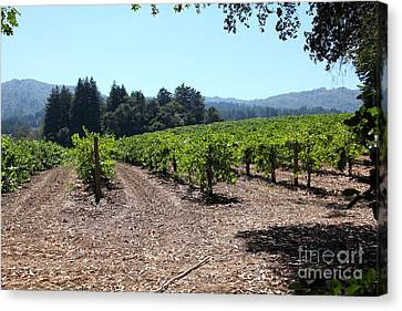 Napa Valley And Vineyards Canvas Print - Sonoma Vineyards In The Sonoma California Wine Country 5d24511 by Wingsdomain Art and Photography