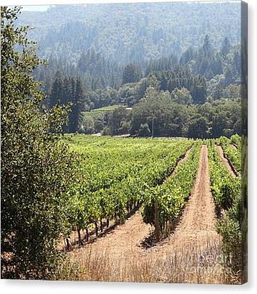 Napa Valley And Vineyards Canvas Print - Sonoma Vineyards In The Sonoma California Wine Country 5d24515 Square by Wingsdomain Art and Photography