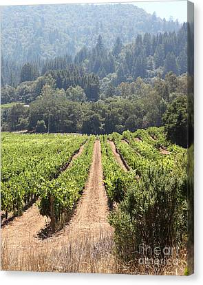 Sonoma Vineyards In The Sonoma California Wine Country 5d24515 Vertical Canvas Print by Wingsdomain Art and Photography