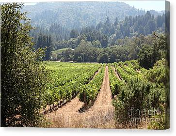 Napa Valley And Vineyards Canvas Print - Sonoma Vineyards In The Sonoma California Wine Country 5d24515 by Wingsdomain Art and Photography
