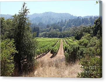 Napa Valley And Vineyards Canvas Print - Sonoma Vineyards In The Sonoma California Wine Country 5d24516 by Wingsdomain Art and Photography