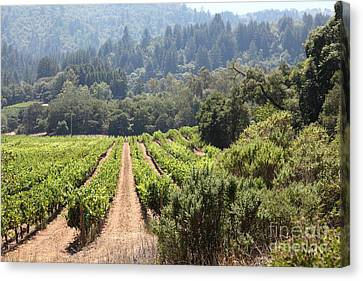 Napa Valley And Vineyards Canvas Print - Sonoma Vineyards In The Sonoma California Wine Country 5d24518 by Wingsdomain Art and Photography