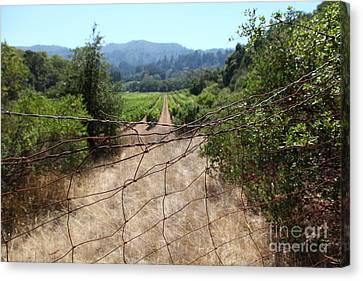 Napa Valley And Vineyards Canvas Print - Sonoma Vineyards In The Sonoma California Wine Country 5d24520 by Wingsdomain Art and Photography
