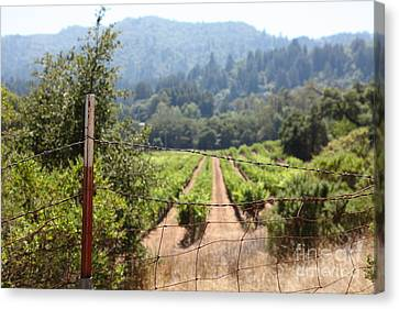 Napa Valley And Vineyards Canvas Print - Sonoma Vineyards In The Sonoma California Wine Country 5d24521 by Wingsdomain Art and Photography