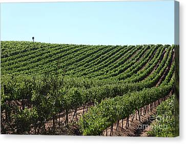 Sonoma Vineyards In The Sonoma California Wine Country 5d24588 Canvas Print by Wingsdomain Art and Photography