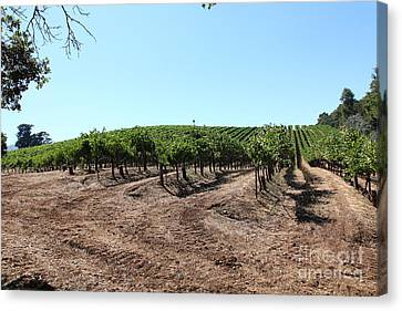 Napa Valley And Vineyards Canvas Print - Sonoma Vineyards In The Sonoma California Wine Country 5d24597 by Wingsdomain Art and Photography