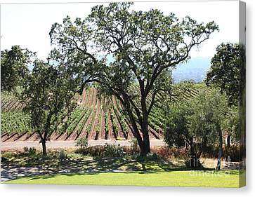 Sonoma Vineyards In The Sonoma California Wine Country 5d24620 Canvas Print by Wingsdomain Art and Photography