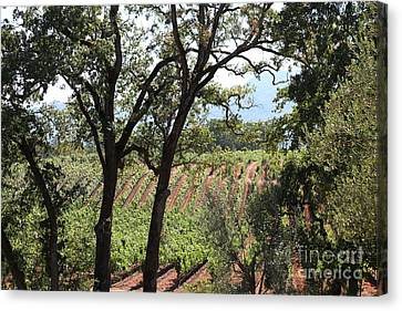 Sonoma Vineyards In The Sonoma California Wine Country 5d24622 Canvas Print by Wingsdomain Art and Photography