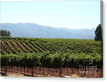 Sonoma Vineyards In The Sonoma California Wine Country 5d24623 Canvas Print by Wingsdomain Art and Photography
