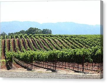 Sonoma Vineyards In The Sonoma California Wine Country 5d24625 Canvas Print by Wingsdomain Art and Photography