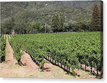 Sonoma Vineyards In The Sonoma California Wine Country 5d24632 Canvas Print by Wingsdomain Art and Photography
