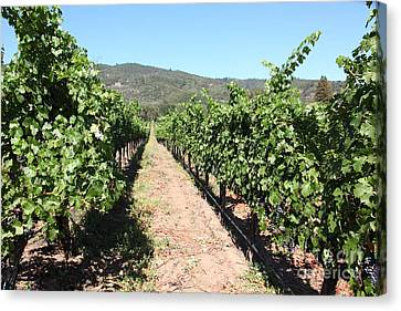 Sonoma Vineyards In The Sonoma California Wine Country 5d24638 Canvas Print by Wingsdomain Art and Photography