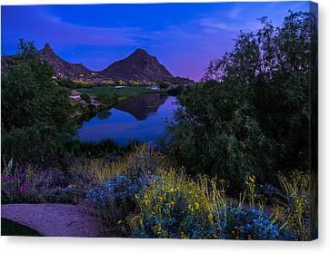 Sonoran Desert At Dusk Canvas Print by Scott McGuire