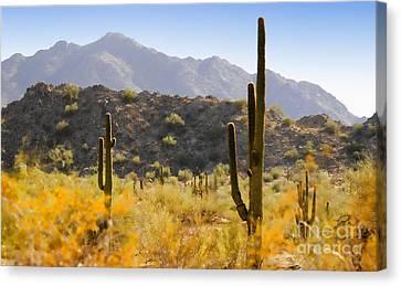 Sonoran Desert Beauty Canvas Print by Betty LaRue