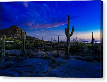 Sonoran Desert Saguaro Cactus Canvas Print by Scott McGuire
