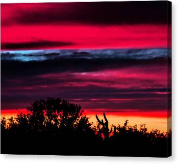 Sonoran Sunset Tucson Desert Canvas Print by Jon Van Gilder
