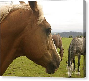 Canvas Print featuring the photograph Sorrel Horse Profile by Belinda Greb