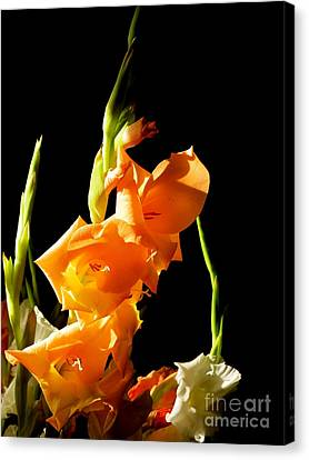 Canvas Print featuring the photograph Sorry by Paul Foutz