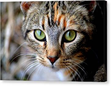 Canvas Print featuring the photograph Soul Cat by Deena Stoddard