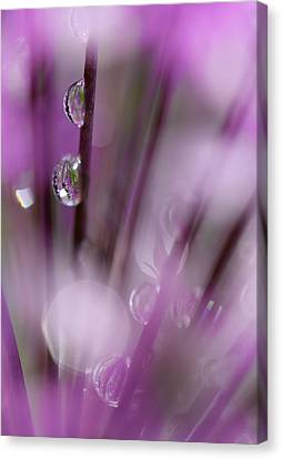 Soul In Rain Canvas Print by Tracy Male