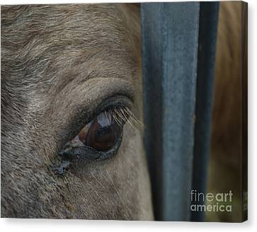 Canvas Print featuring the photograph Soul Searching Eyes by Peter Piatt