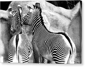 Canvas Print featuring the photograph Soulmates by Kristine Merc