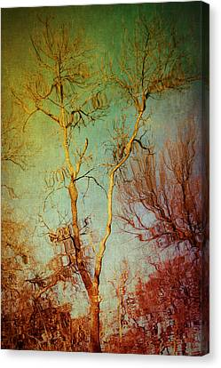 Souls Of Trees Canvas Print by Trish Mistric