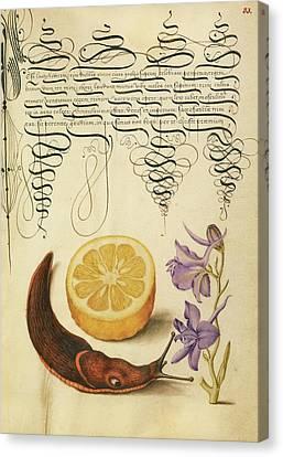 Sour Orange, Terrestrial Mollusk, And Larkspur Joris Canvas Print by Litz Collection