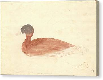 South African Shelduck Canvas Print by Natural History Museum, London