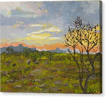 South African Sunset Canvas Print