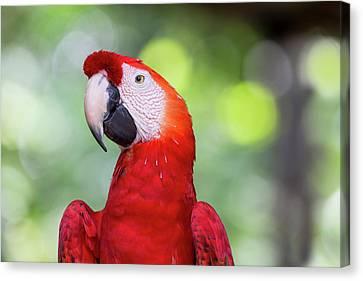 South America, Brazil, Amazon, Manaus Canvas Print