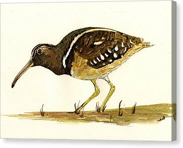 South American Painted Snipe Canvas Print by Juan  Bosco