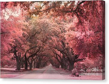 South Carolina Angel Oak Trees Nature Landscape Canvas Print by Kathy Fornal