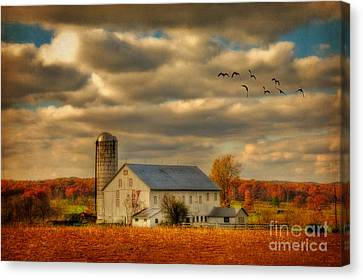 South For The Winter Canvas Print by Lois Bryan