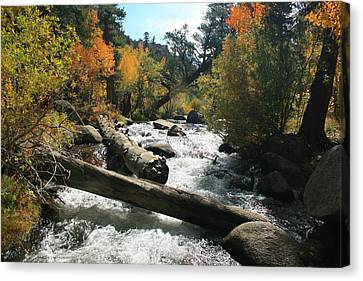 South Fork Bishop Creek Canvas Print