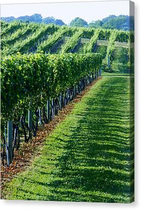 South Fork Vineyard Canvas Print by John Wartman