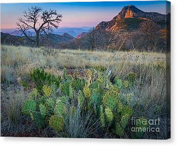 South Rim Morning Canvas Print by Inge Johnsson