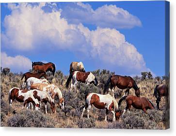 Steen Canvas Print - South Steens Feral Horses by Kathleen Bishop