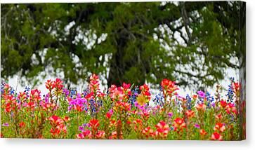 South Texas Blend Canvas Print