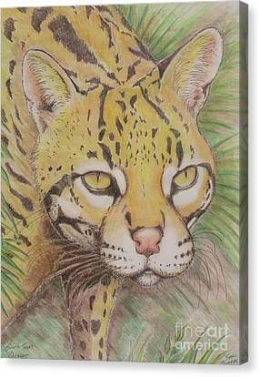 South Texas Ocelot Canvas Print by Sue Bonnar