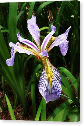 Southern Blue Flag Iris Canvas Print