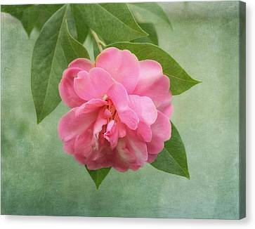 Southern Camellia Flower Canvas Print by Kim Hojnacki