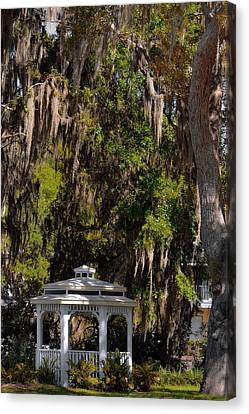 Live Oaks Canvas Print - Southern Gothic In Mount Dora Florida by Christine Till