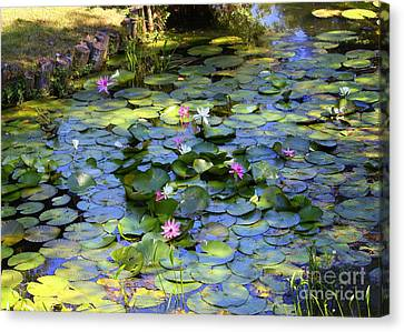Southern Lily Pond Canvas Print