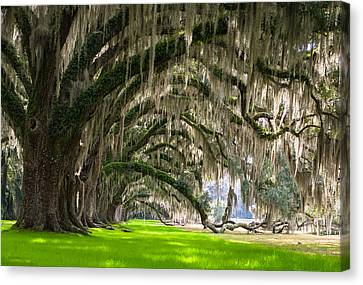 Southern Oaks Canvas Print