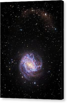 Southern Pinwheel Galaxy Canvas Print by Robert Gendler