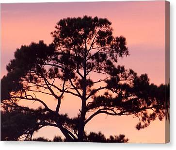 Southern Sundown Canvas Print